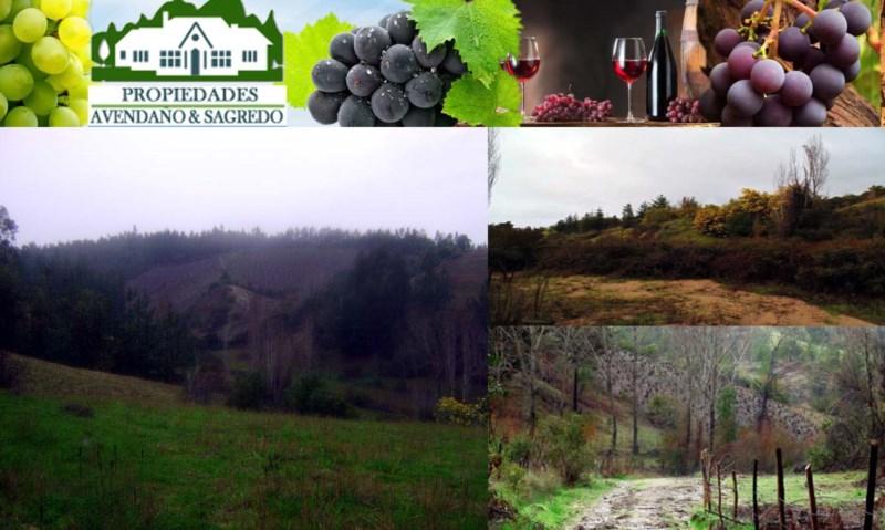 Fundo con cepas vinícolas